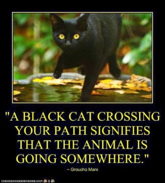 a-black-cat-crossing-your-path-signifies-that-the-animal-is-going-somewhere1