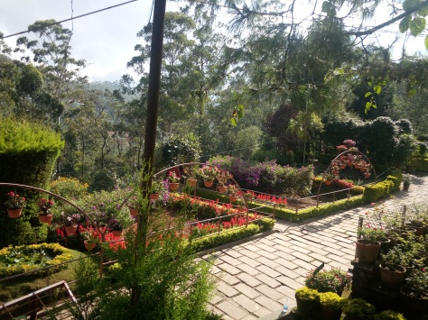 Rose garden Munnar - somecolorsoflife